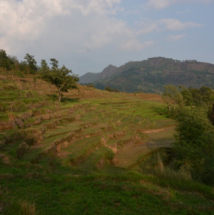 image:Carbon sequestration to rejuvenate land, water and economy in Nepal